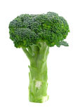 Broccoli isolated on white background. Green and Fresh Broccoli isolated on white background stock image