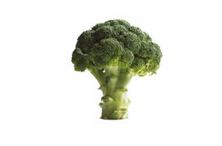 Broccoli isolated on white. Concept of tree Royalty Free Stock Image