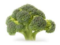 Broccoli isolati su fondo bianco Immagini Stock