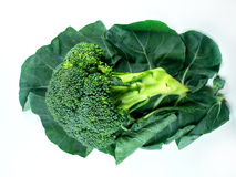 Broccoli and Leaf Royalty Free Stock Photo