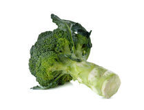 Broccoli with leaf on white Royalty Free Stock Photo