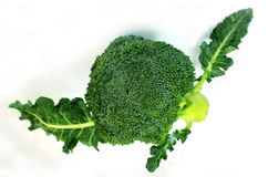 Broccoli with leaves. Green fresh broccoli with isolated white background stock photography