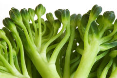 Broccoli macro image Royalty Free Stock Photos