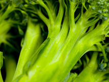 Broccoli Royalty Free Stock Images