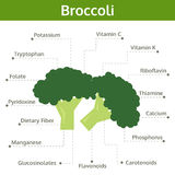Broccoli nutrient of facts and health benefits, info graphic Stock Photos