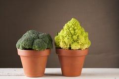 Broccoli och romanescoblomkål i lerakruka Royaltyfria Bilder