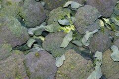 Broccoli op vertoning Royalty-vrije Stock Foto