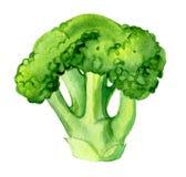 Broccoli op wit, waterverfillustratie worden geïsoleerd die stock afbeeldingen