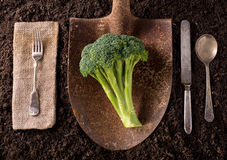 Broccoli. Organic farm to table healthy eating concept on soil background Royalty Free Stock Images