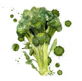 Broccoli with paint blots Stock Photo