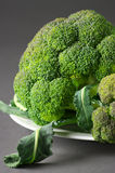 Broccoli on plate Stock Photography