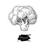 Broccoli räcker den utdragna illustrationen Grönsak inristad stil stock illustrationer
