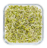 Broccoli and radish sprouts Royalty Free Stock Photos