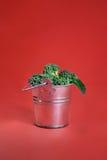 Broccoli in secchio d'argento su rosso Immagini Stock Libere da Diritti