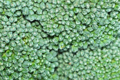 Broccoli Series 03 Royalty Free Stock Images
