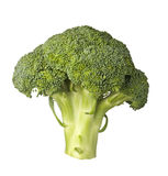 Broccoli. Single stalk of broccoli isolated on white background Royalty Free Stock Image