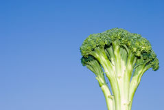 Broccoli in the sky Stock Image