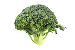 Broccoli sprout isolated over white. Close-up of broccoli sprout isolated over white Stock Photos