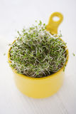 Broccoli sprouts. In a yellow bowl Royalty Free Stock Photography