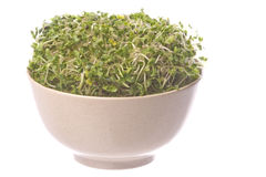 Broccoli Sprouts in Bowl Isolated Royalty Free Stock Photos