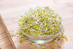 Broccoli Sprouts in a bowl. Small bowl with fresh Broccoli Sprouts on wood Stock Image