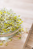 Broccoli Sprouts in a bowl. Small bowl with fresh Broccoli Sprouts on wood Stock Images