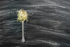Broccoli sprouts Royalty Free Stock Image