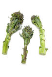 Broccoli stalks Stock Image