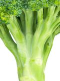 Broccoli stem close up Royalty Free Stock Images