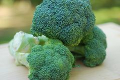Broccoli Royalty Free Stock Photo