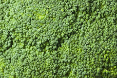 Broccoli texture Stock Images