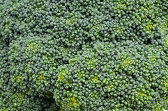 Broccoli texture Royalty Free Stock Photo