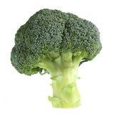 Broccoli Tree. Fresh organic broccoli stalk on white background, Short DOF Royalty Free Stock Photo