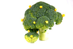Broccoli tree Royalty Free Stock Images
