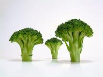 Broccoli Trees Stock Photos