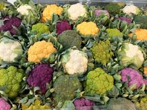 Broccoli. A variety of colorful fresh broccoli royalty free stock images