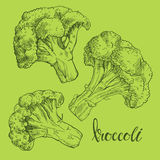 Broccoli. Vector illustration, sketch on a green background.   hand-drawn elements for your design. Royalty Free Stock Photography