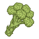 Broccoli vector. Isolated on white background. Broccoli food ingredient. Engraved hand drawn illustration in retro vintage style. Organic Food, sauce, dishes Royalty Free Stock Images