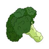 Broccoli in vector on white Stock Photography