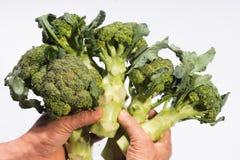Broccoli vegetable fresh organic white background. Green organic farm broccoli vegetable white background Stock Photography