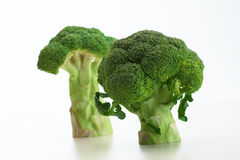 Broccoli vegetable isolated. On white background Stock Photography