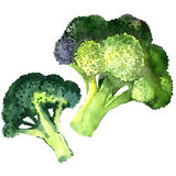 Broccoli vegetable isolated on white background Stock Image