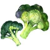 Broccoli vegetable isolated on white background Stock Image