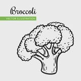 Broccoli. Vegetarian food. Hand drawn isolated broccoli.  Vector vintage vegetables illustration.  Can be used for wrapping paper, street festival, farmers Stock Photo
