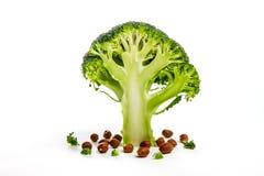 Broccoli verdi Fotografia Stock Libera da Diritti