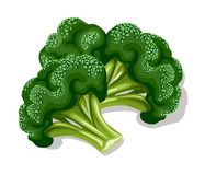 Broccoli vert frais Photo stock
