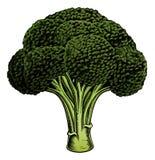 Broccoli vintage woodcut illustration vector illustration