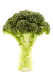 Broccoli on white background Royalty Free Stock Image