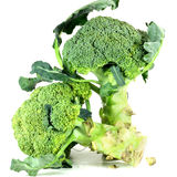 Broccoli. On white background Stock Images