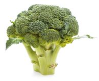 Broccoli  on white background. Raw Broccoli  on the white background Royalty Free Stock Photos